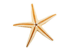 Seastar on the white Royalty Free Stock Photos
