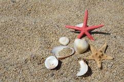 Seastars和壳在海滩 免版税库存图片
