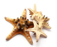 Seastars Royalty Free Stock Photography