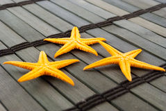 Seastars. Royalty Free Stock Photos