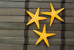 Seastars. Stock Photography