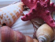 Seastars-Details Lizenzfreies Stockfoto