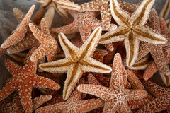 Seastars stock photography