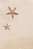 Seastars on the sand of the beach Royalty Free Stock Images