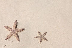 Seastars on the sand of the beach Stock Image
