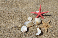 Seastars and shells on beach Royalty Free Stock Images