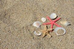 Seastars and shells Royalty Free Stock Images