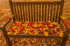 A foliage pillow on a bench in a woodland. The seat of a bench covered with colored leaves fallen from the trees Royalty Free Stock Photos