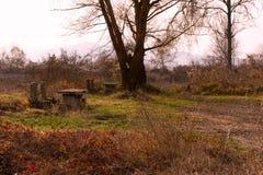 Seat cerca de un árbol Imagen de archivo libre de regalías