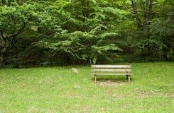 Seat dans la forêt Photos stock