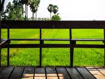 Seat in het midden van verblindende groene padievelden in Thailand royalty-vrije stock fotografie