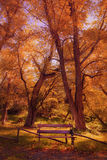 Seat na floresta fotos de stock royalty free