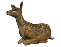 Seated deer Stock Photography