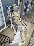 Seated Halloween Skeleton, Cobweb and Spiders stock photo