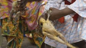 Seated women plucking scalded chickens, Conakry. Extreme close up still shot of two women, wearing traditional full dresses, seated, each carefully plucking stock video footage