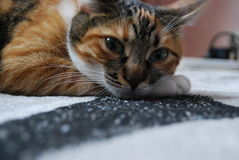 A sad kitty cat  Stock Images