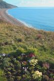 Seaton Bay with flower bed in foreground Royalty Free Stock Photo