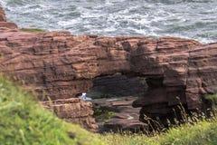 Seaton Cliffs Arbroath i Angus scotland royaltyfria foton
