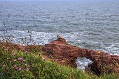 Seaton falezy Arbroath plaża w Angus scotland fotografia royalty free