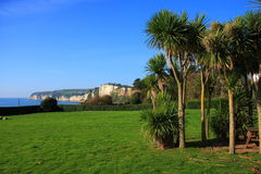 Seaton Palm Trees. A view of Beer headland in Devon England taken from the town of Seaton Stock Image