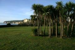seaton palmowi drzewa Obraz Stock