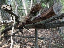 Seaton Trail, Pickering, Ontario Bomen en aard royalty-vrije stock fotografie