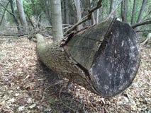 Seaton Trail Pickering, Ontario Träd och natur Arkivbilder