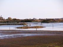 Seaton Wetlands i devon arkivfoton