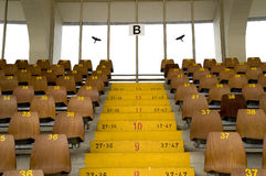 Seats. Raws of numbered wooden seats and yellow painted numbered stairs in a stadium. With space for copy stock photography