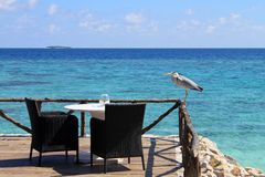 Seats by an ocean view. Restaurant seats at a balcony facing the ocean with a pelican perched near it, in a resort at Maldives royalty free stock images