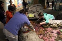 Seattle akvarium Arkivbild