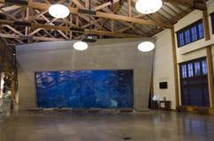 Seattle Aquarium. A big fish tank in the lobby of Seattle Aquarium Stock Photo