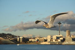 Seattle city view with Space needle and sea gull (seafow, seabird) Royalty Free Stock Photos