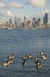 Seattle essencial Imagens de Stock Royalty Free