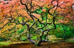 Seattle-Japaner-Garten Lizenzfreie Stockbilder