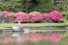 Seattle Japanese garden Royalty Free Stock Photo