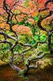 Seattle Japanese Garden Royalty Free Stock Photos