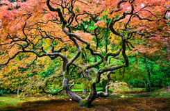 Seattle Japanese Garden Royalty Free Stock Images