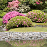 Seattle japanträdgård arkivbilder