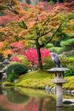 Seattle japanträdgård Arkivfoto