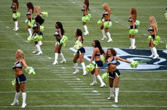 Seattle Seahawk Seagals Stock Photos