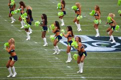 The Seattle Seahawk Seagals Royalty Free Stock Image