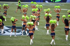 The Seattle Seahawk Seagals Royalty Free Stock Images