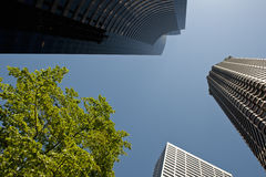 Seattle skyscrapers Stock Images