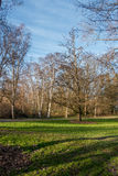 Seattle Spring Trees. A view of trees at a Seattle park in Spring Stock Photo