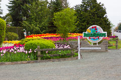 SEATTLE, WA - APRIL 29, 2017: Scagit Valley Tulip Festival in Washington. Stock Images