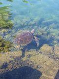 Seaturtle Photographie stock