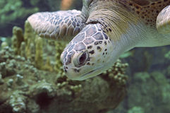 Seaturtle I Stock Images