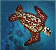 Seaturtle. Sea turtle swimming on a coral reef Royalty Free Stock Photos