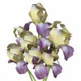 Seau avec Iris Flowers Photographie stock libre de droits